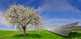 Solarenergieplatten mit blühendem Baum Stockfotografie