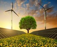 Solarenergieplatten, -Windkraftanlagen und -baum auf Löwenzahnfeld bei Sonnenuntergang Stockbild