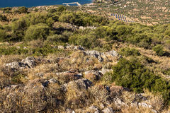 Solarfeld auf Griechenland Stockfoto
