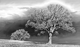Solarized träd i svartvitt Royaltyfria Foton