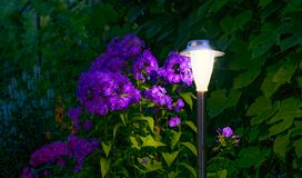 Solarlampe im Garten Stockbild