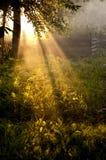 Solarlichtstrahlen Stockbild