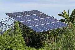 Solarzellen-Platte im Grünpflanzebereich Stockfoto