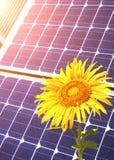 Solarzellen und Sonnenblume Lizenzfreie Stockbilder