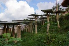 Solarzellenbaum im grünen Dorf Stockfotografie