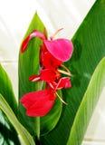 Solas flor y hoja rojas Imagenes de archivo