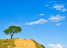 Solated-Baum im Hügel mit blauem und bewölktem Himmel lizenzfreies stockfoto