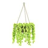 Solated hängande exotisk kruka Royaltyfri Fotografi