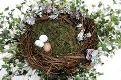 Solated no ninho branco do pássaro da fantasia com o suporte da foto do fundo dos ovos (introduza seu cliente!) imagem de stock royalty free