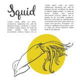 Solated squid with yellow spots. Sketch squid, vector illustration drawn by hand on a white background, isolated squid, sea food concept for the menu Stock Image
