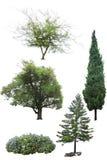 Solated träd på vit bakgrund Arkivbilder