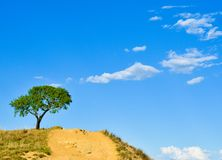 Solated tree in hill with blue and cloudy sky. Isolated tree in hill with blue and cloudy sky, Salamanca, Spain royalty free stock photo