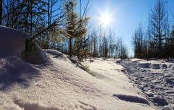 Solavbrott till och med de prydliga vinterstrålarna av våren royaltyfria foton