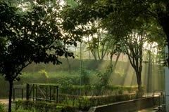Solbad Arkivfoton
