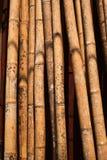 Solbada för bambu Royaltyfri Fotografi