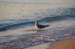 Solbada för fågel Arkivfoton