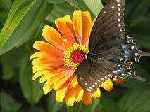 solbada för fjäril Arkivbild
