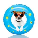 solbada för hund Arkivfoton