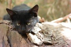 Solbada katt Arkivbilder