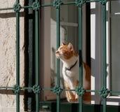 Solbada katt Arkivbild
