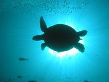 solbada sköldpadda Arkivbild