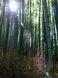Solbelyst bambuskog, med linssignalljuset och spiderweb Royaltyfria Bilder