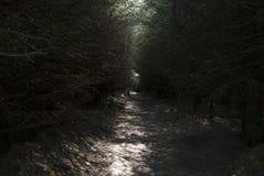 Solbelyst bana i en skog fotografering för bildbyråer