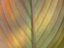 solbelyst bladtextur Fotografering för Bildbyråer