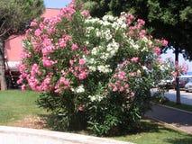 Solbelyst blomma buske arkivfoto
