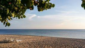 Solbelyst closeupbild av gamla träd och dagdrivare på den tropiska stranden Arkivfoto