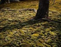 Solbelyst mossaträdgård Royaltyfri Fotografi