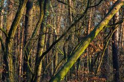 Solbelyst skog i höst Arkivbilder