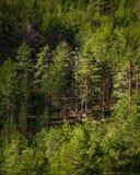 Solbelyst skog med skogbanan Royaltyfria Bilder