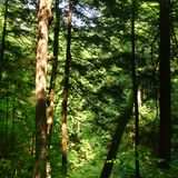 Solbelyst skogbakgrund Arkivbilder