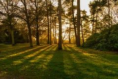 Solbelyst skogsmark i höst med avlägsna diagram royaltyfria bilder