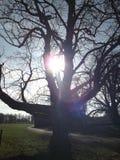 Solbelyst träd Arkivfoto