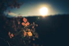 Solbelysta Autumn Leaves Arkivfoton