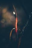 Solbelysta höstgrässtrån Arkivbild
