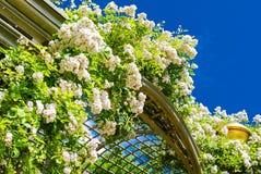 Solbelysta lockiga blommor i trädgårdarna av Versailles Arkivfoto