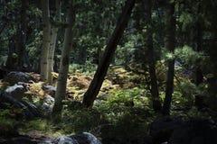 Solbelysta ormbunkar i den Coconino medborgaren Forest Along Kachinaen T arkivfoto