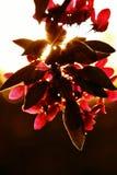 Solblomma Royaltyfria Foton