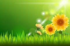 Solblomma och solljus med grönt gräs Royaltyfria Bilder