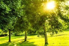 Solbortgång till och med några askaträd Arkivfoto