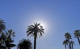 Solbortgången bak en palmträd Royaltyfria Foton