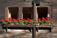 Solbränd traditionell schweizisk chalet royaltyfri foto
