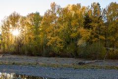 Solbristningar till och med hösten färgade träd längs den Naches floden royaltyfria foton
