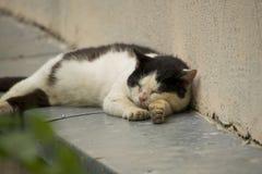 Solch eine faule Katze Stockfoto