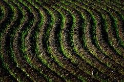 Solchi a terra arati della sporcizia del campo dell'azienda agricola pronti per piantare Immagine Stock