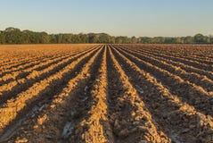 Solchi in terra rossa Fotografie Stock Libere da Diritti