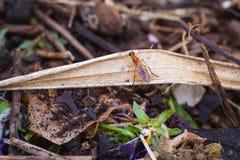 Soldado anaranjado Fly Foto de archivo